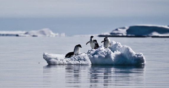 Ice-floe penguins